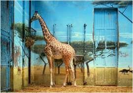 Candida Höfer: Zoologischer Garten Paris II, 1997
