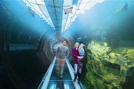 Eine Familie 'unter Wasser' im von innen begehbaren Aquarium. Besucher des Haus des Meeres in Wien bekommen bis 11. Oktober 2020 einen 15% Rabatt-Gutschein auf den nächsten Lidl Einkauf.