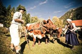 Bauer und Bäuerin mit Kühen im Wagengeschirr am Almkirtag in Ruhpolding