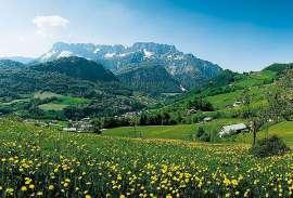 Blühende Wiesen in Grossgmain