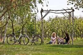 Picknick im Grünen vor einem Weingarten im Seewinkel