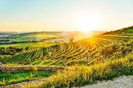 Der herbstlich gefärbte Zöbinger Heiligenstein im Gegenlich der untergehenden Sonne