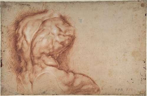 Peter Paul Rubens: Studie des Torso, Belvedere