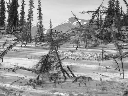 Benedikt Partenheimer: Drunken Trees Alaska 2017