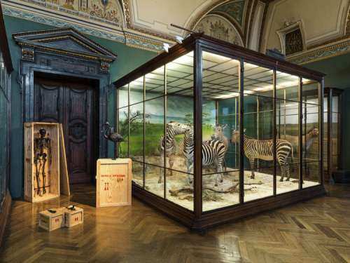 Ausstellungsansicht im Nathurhistorischen Museum Wien: Mark Dion: The Tar Museum – Skeleton Cabinet, Lizard and Gecko & Flamingo, 2006