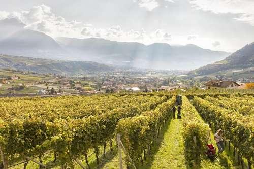 Traumhafter Ausblick über die Weinberge in Algund