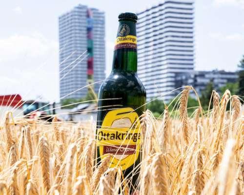 Eine Flasche Wiener Original im Kornfeld
