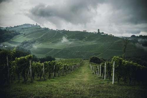 Steirische Hügellandschaft mit Weingärten