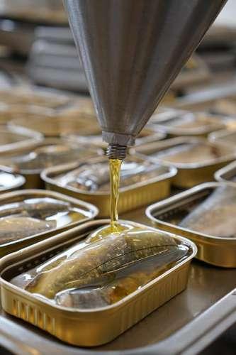 In der Produktion stehen viele noch offene Dosen mit Saibling, eine wird gerade mit kaltgepresstem Rapsöl aufgefüllt