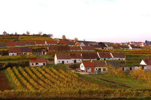 Impressionen dem Weinbaugebiet Kamptal in Niederösterreich im Herbst