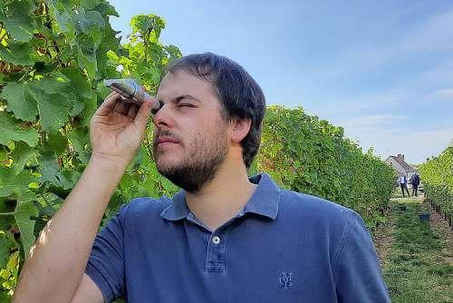 Weingut Meyer Lese 2020: Marius Meyer misst beim Sauvignon Blanc 2020 satte 90 Grad Oechsle