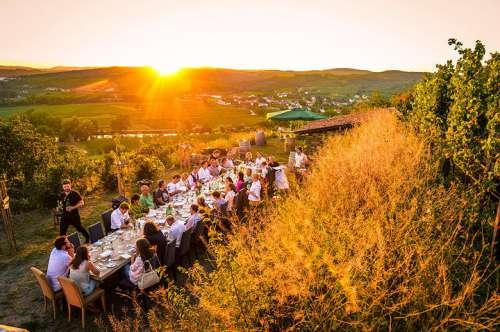 Eine lange Tafel mit Gästen mitten im herbstlichen Weingarten kurz vor Sonnenuntergang
