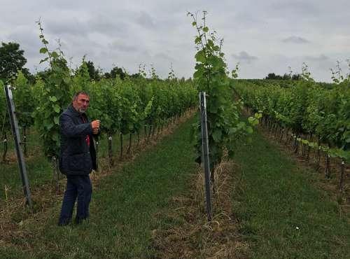 Franz Schindler Senior führt durch einen Weingarten